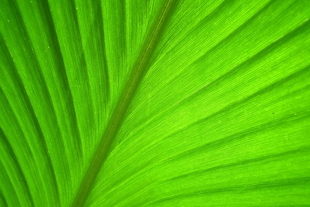 Translucent leaves ,In the morning photo