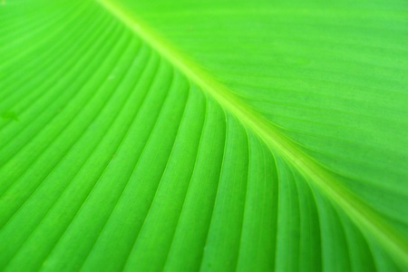 Curly leaves , On the back of the leaves Stock Photo - 11575778