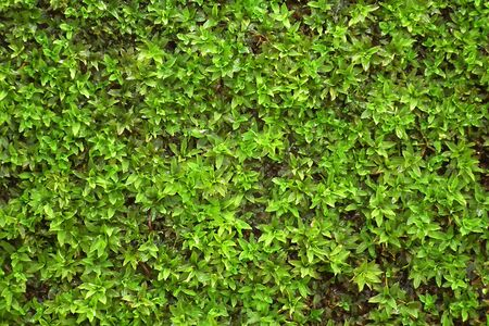 Moss on the soil moist