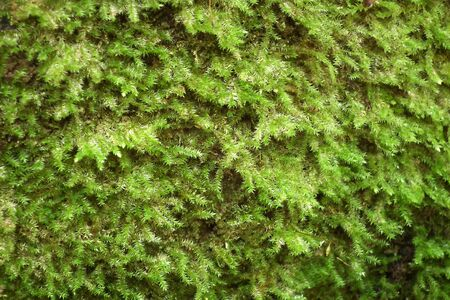 Moss on the cliffs Stock Photo
