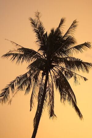 Coconut evening Stock Photo