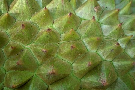 Thorny durian Stock Photo