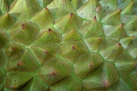 thorny: Thorny durian Stock Photo