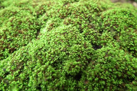 Moss on the ground roughness Stock Photo