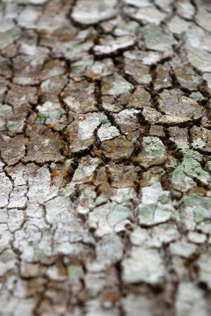 Rubber tree bark. Southern Thailand Stock Photo