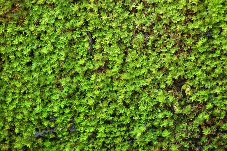 Moss on the wall of cement. Stock Photo - 13058025