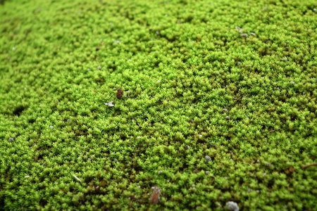 Moss on the ground. Stock Photo