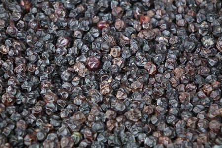 Pepper seeds dry out. Stock Photo