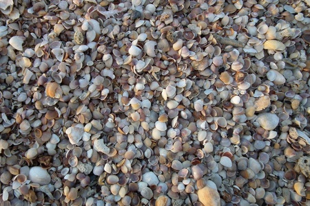 Small shells on the beach.