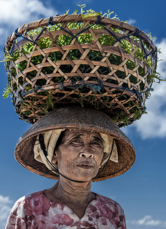 Nusa Penida, Bali Indonesia - September 2015: Indonesian farmers grow seaweed in a traditional method. Lady farmer carrying collected seaweeds in a basket from sea to her house for drying, Indonesia