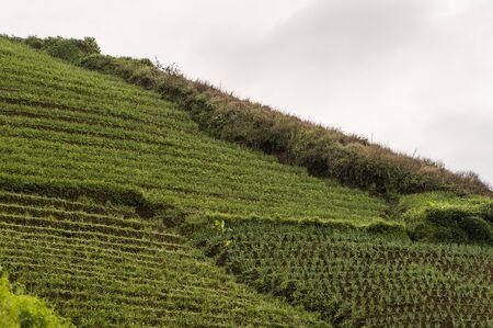 Argapura onion plantations beautiful view in daytime, Indonesia