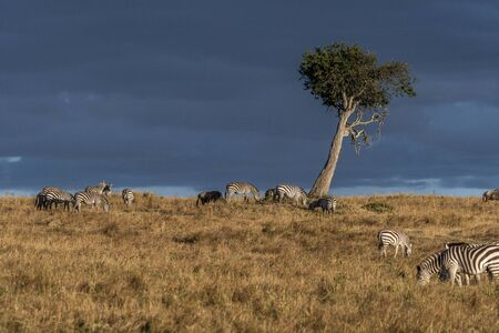 Beautiful landscapes during great migration season in Maasai Mara triangle