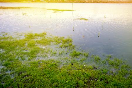 Plenty lakeside, Moisture pond at sunset with dragonfly, shellfish.