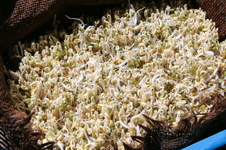 Organic bean sprouts, without chemical and hormone