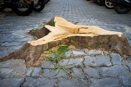 A stump: The part of a tree trunk left protruding from the ground after the tree has has been felled. A big tree has fallen to the car then all of them has been felled. Why we cant live with big tree Stock fotó
