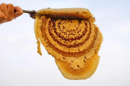 Honeycombs and hives from nature
