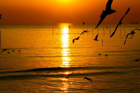 Group of Seagull are Flying over the Sea in twilight sky sunset time at Bangpoo, Thailand Фото со стока - 128679519