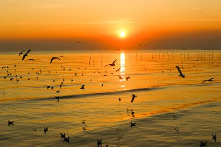 Group of Seagull are Flying over the Sea in twilight sky sunset time at Bangpoo, Thailand 版權商用圖片