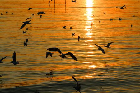 Group of Seagull are Flying over the Sea in twilight sky sunset time at Bangpoo, Thailand Фото со стока - 128876530