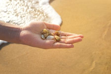 Sea shells in the girl's hand. Фото со стока