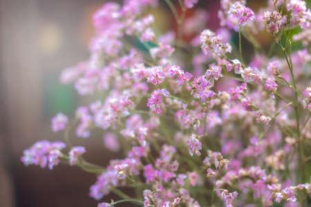 Caspia flower. Flower of memory.