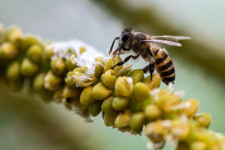 bee on flower: Bee on flower in the garden Stock Photo