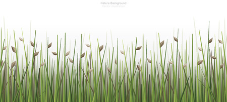 Outdoor green field background isolated on white. Natural abstract background. Vector illustration.