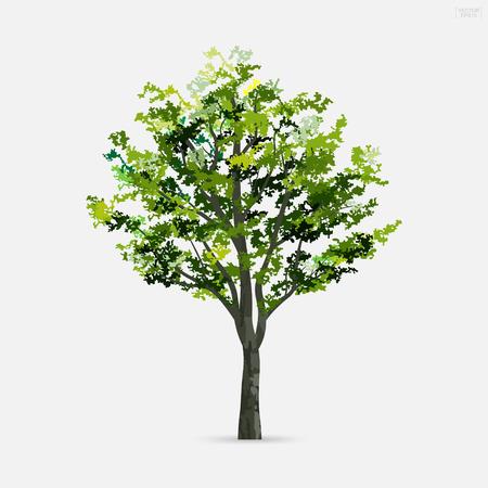 Baum lokalisiert auf weißem Hintergrund mit weichem Schatten. Verwendung für Landschaftsgestaltung, architektonisch dekorativ. Park- und Outdoor-Objektidee für Naturartikel sowohl auf Print als auch auf der Website. Vektorillustration. Vektorgrafik