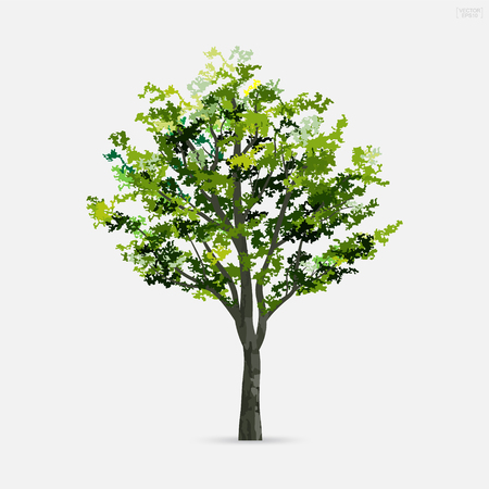 Tree isolated on white background with soft shadow. Use for landscape design, architectural decorative. Park and outdoor object idea for natural article both on print and website. Vector illustration. Фото со стока - 106164303
