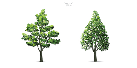 Collection of tree isolated on white background. Natural object for landscape design, architectural decoration, park and outdoor graphic. Vector illustration.