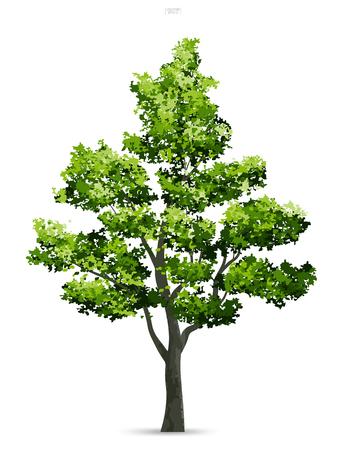 Árbol aislado sobre fondo blanco con sombra suave. Uso para diseño de paisaje, decoración arquitectónica. Idea de parque y objeto al aire libre para artículo natural tanto en impresión como en sitio web. Ilustración vectorial Ilustración de vector