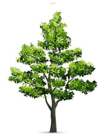 Tree isolated on white background with soft shadow. Use for landscape design, architectural decorative. Park and outdoor object idea for natural article both on print and website. Vector illustration. 스톡 콘텐츠 - 112226580
