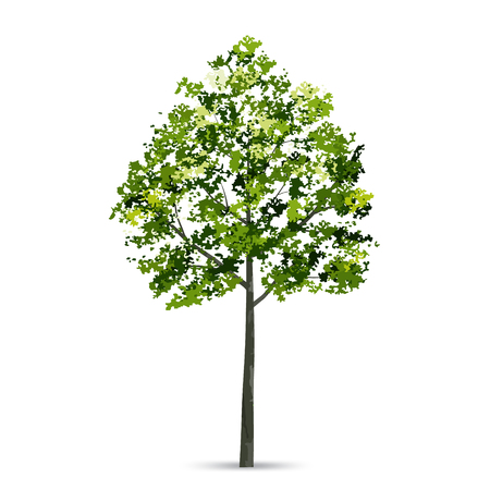 Tree isolated on white background with soft shadow. Natural object for landscape design. Vector illustration. Ilustracja