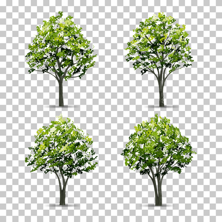 Collection of Tree isolated on transparent background with soft shadow. Vector illustration.