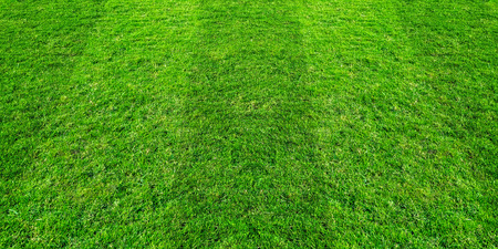 Green grass field pattern background for soccer and football sports. Green lawn pattern and texture background. 写真素材