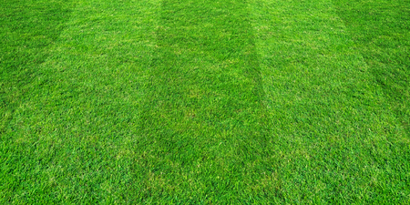 Green grass field pattern background for soccer and football sports. Green lawn pattern and texture background. Stock Photo