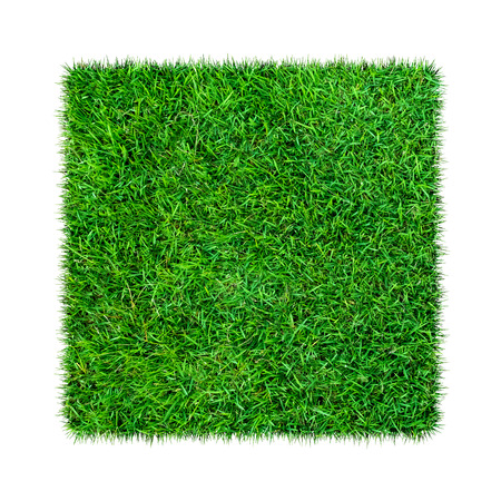 Green grass. Natural texture background. Fresh spring green grass. isolated on white background with clipping path.