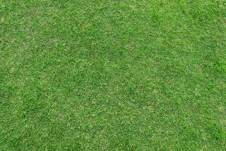 Green grass pattern and texture for background. Close-up image. Banque d'images - 129192714