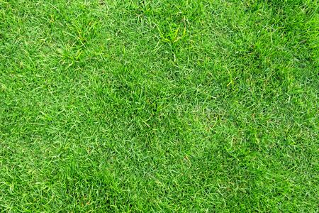 Green grass pattern and texture for background. Close-up image. Banque d'images - 129192775