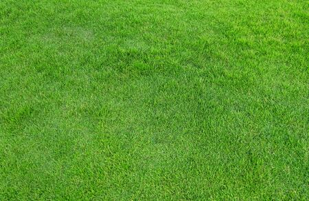 Green grass pattern and texture for background. Close-up image. Banque d'images - 129192996