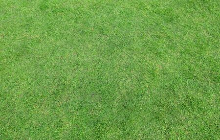 Green grass pattern and texture for background. Close-up image. Banque d'images - 129192991