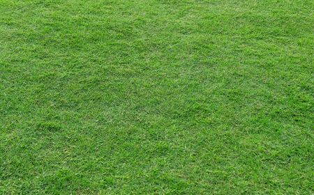 Green grass pattern and texture for background. Close-up image. Banque d'images - 129193027