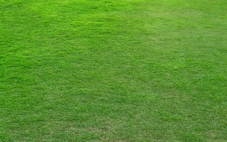 Green grass pattern and texture for background. Close-up image. 스톡 콘텐츠