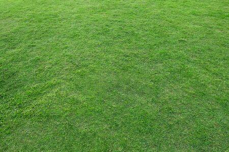 Green meadow grass for soccer football field. 写真素材
