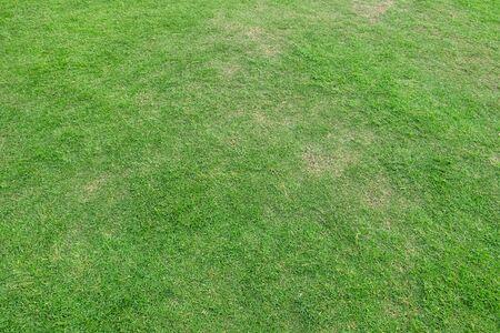 Textur des grünen Grases für den Hintergrund. Grünes Rasenmuster und Beschaffenheitshintergrund. Nahansicht.