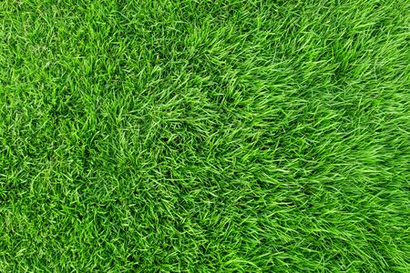 Green grass texture for background. Green lawn pattern and texture background. Close-up. Stock fotó