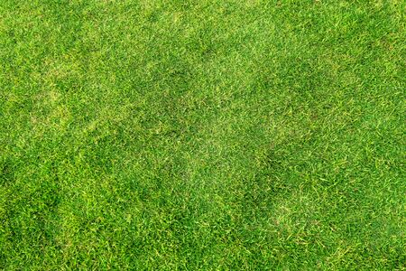 Artificial green grass background. Green grass floor texture ideal for use top view sport background.