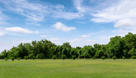 Landscape of grass field and green environment public park with blue sky. Beautiful summer landscape for background.