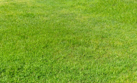 Green grass texture for background. Green lawn pattern and texture background. Close-up image. Foto de archivo