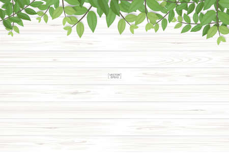 Wood texture background with green leaves. Realistic vector illustration. Vettoriali